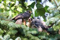 気になる - 北の大地で野鳥ときどきフライフィッシング
