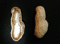 落花生(peanut)。 - あすか司法書士事務所 補助者の日記<東京都台東区>