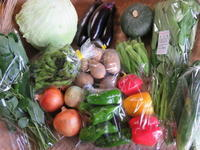 今週の野菜セット 8月4週目 - まるみど農園のあれこれ日記