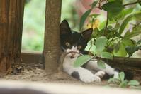 ねこ - ネコと裏山日記