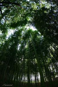 竹林 - 今日の空+α2