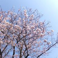 2017年4月のこと① 奈良と大阪へ。 - 空想旅行社 海月の骨