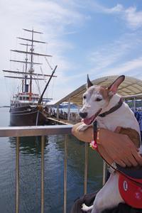 犬と旅する淡路島2 - Vivement les vacances! お休みが待ちどおしい