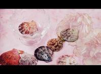 貝の物撮り - 想い出