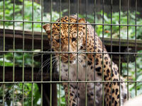 よこはま動物園ズーラシア 8月20日 ナイトズーラシア - お散歩ふぉと