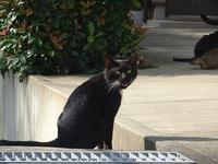 ブラッキー - ネコと裏山日記