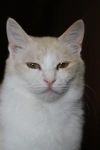 ハルね~ちゃんのこと - Black Cat Moan