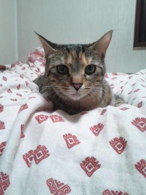 猫風邪回復中と近況ご報告頂きました -