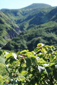 夏の終わりの白山釈迦新道 - 白山に魅せられて