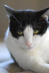 ナツのこと - Black Cat Moan