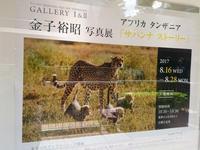 金子裕昭写真展 アフリカタンザニア「サバンナ ストーリー」 - 一意専心のシャッターを!
