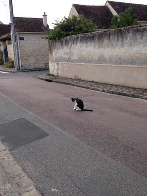 村自慢 - (ちょっとだけ!)おしゃれなフランス生活