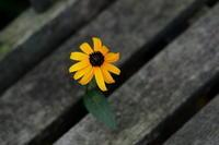 小さな太陽 - 心の色~光生写真館~