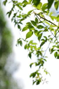 Green Leaves - 心の色~光生写真館~