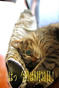にゃんこ劇場「8月31日の思い出」 - ゆきなそう  猫とガーデニングの日記