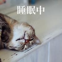 にゃんこ劇場「また寝ます!」 - ゆきなそう  猫とガーデニングの日記