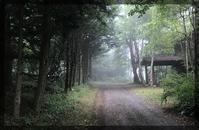 霧のお散歩と名残りの花たち - 森の扉