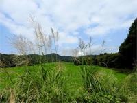 もうすぐ9月、ごはんがおいしい季節 - 北軽井沢スウィートグラス