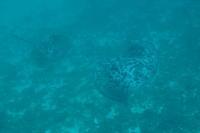 17.8.30 休み、楽し! - 沖縄本島 島んちゅガイドの『ダイビング日誌』