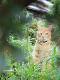畑の猫 - すみやのひとり言・・・