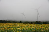 福島 湖南町 布引風の高原のひまわり その2 - 日本あちこち撮り歩記