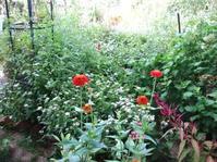 何となくカオスっぽい庭 - 花の自由旋律