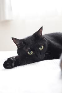 黒猫の残念なところ - きょうだい猫と仲良し暮らし