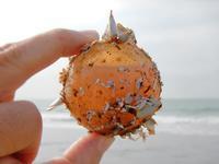 水入り浮き玉 - Beachcomber's Logbook
