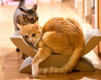 研究中 - 猫と夕焼け