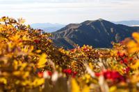 白山の紅葉がはじまった♪ - 白山に魅せられて