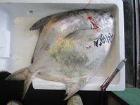 研究者も注目!!有明海の珍魚・珍貝が人気です。 - 夜明茶屋のおさかなブログ