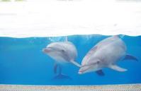 夏だ!京都水族館だ! - 息子と写真がすき。