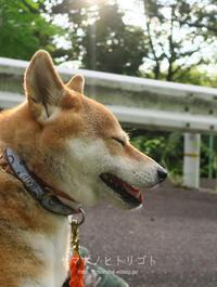 8月の雑記録&写真の断捨離【フォトムービーあり】 - yamatoのひとりごと