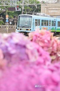 鎌倉で カールが走る - 写愛館