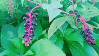 新しいハピママのチラシできました! - ハピママの家・BinO山口・ナカムラハウスのスタッフブログ