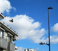 久しぶりの青い空に白い雲、鳩も喜んで~ - のんびり街さんぽ