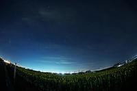 夜明け前のひまわり畑 - びっと飴