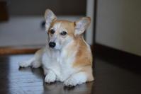 9月2日のアー君 - むーちゃんパパのブログ 3