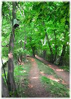 玉川上水緑地道 ~過去のニッキから アーカイヴ~ - nazunaニッキ