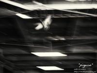 """""""pigeon"""" - ~まきち写真工房~"""
