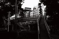 歩道橋 - S w a m p y D o g - my laidback life