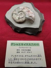長野そぞろ歩き:長野市立博物館特別展・恐竜展 - 日本庭園的生活