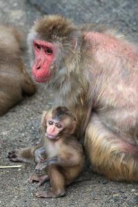 9月3日(日) 馬鹿ヂカラ - ほのぼの動物写真日記