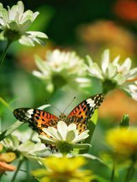 赤塚植物園の蝶 - いや、だから 姉ちゃん じゃなくて ネイチャー・・・