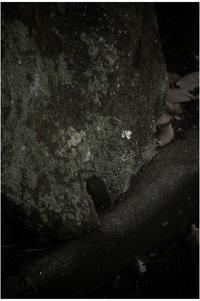 1869 奈良町(2017年8月9日キネタール37.5㎜F1.8の超絶開放で)3 時代遅れ! - レンズ千夜一夜