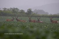 エゾシカに遭遇 - ekkoの --- four seasons --- 北海道