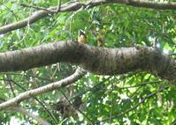 ヤマガラ・オナガ・・山に鳥さんが少ないけど居ないことはない。 - 西多摩探鳥散歩