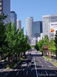 銀杏並木 - 広小路通散歩(旧御堂筋散歩)