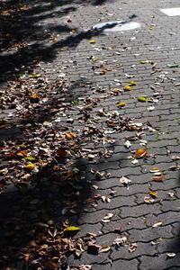 秋へ - day pHoto