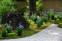 桔梗の庭! ~廬山寺~ - Prado Photography!
